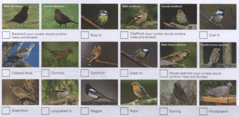 thumb_Birdwatch_1024