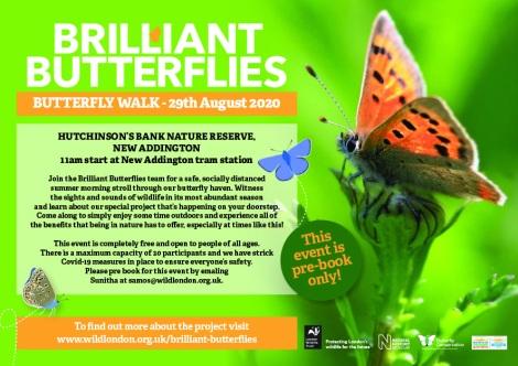 BrilliantButterflies